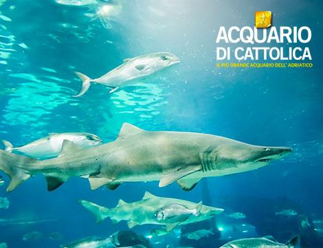 Offerta Luglio Hotel + Acquario di Cattolica